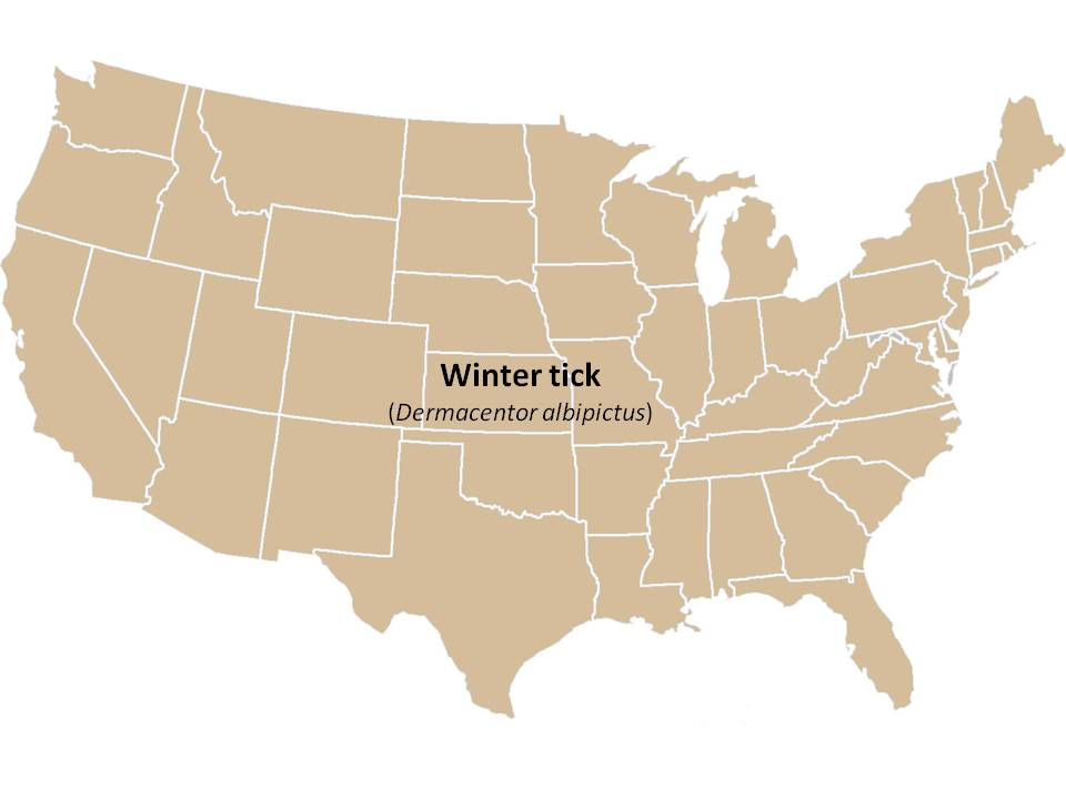 Winter Tick The TickApp For Texas And The Southern Region - Map of ticks in us